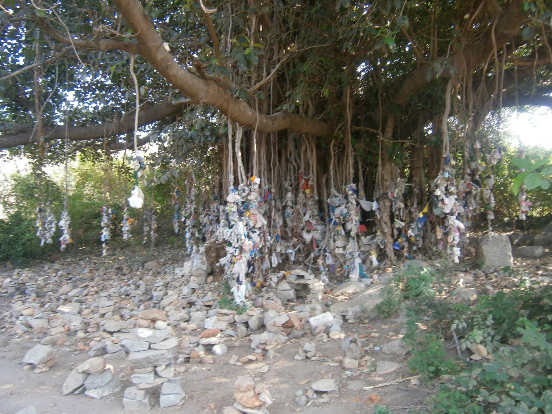 (Albero con offerte votive che ho incontrato lungo una passeggiata nella natura nei dintorni da Hampi)