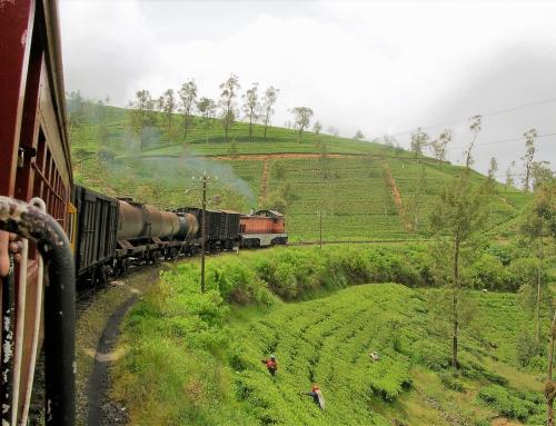 Visitare lo Sri Lanka: cosa sapere prima di partire